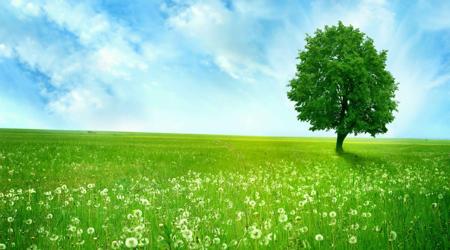 Green Wellbeing Alliance